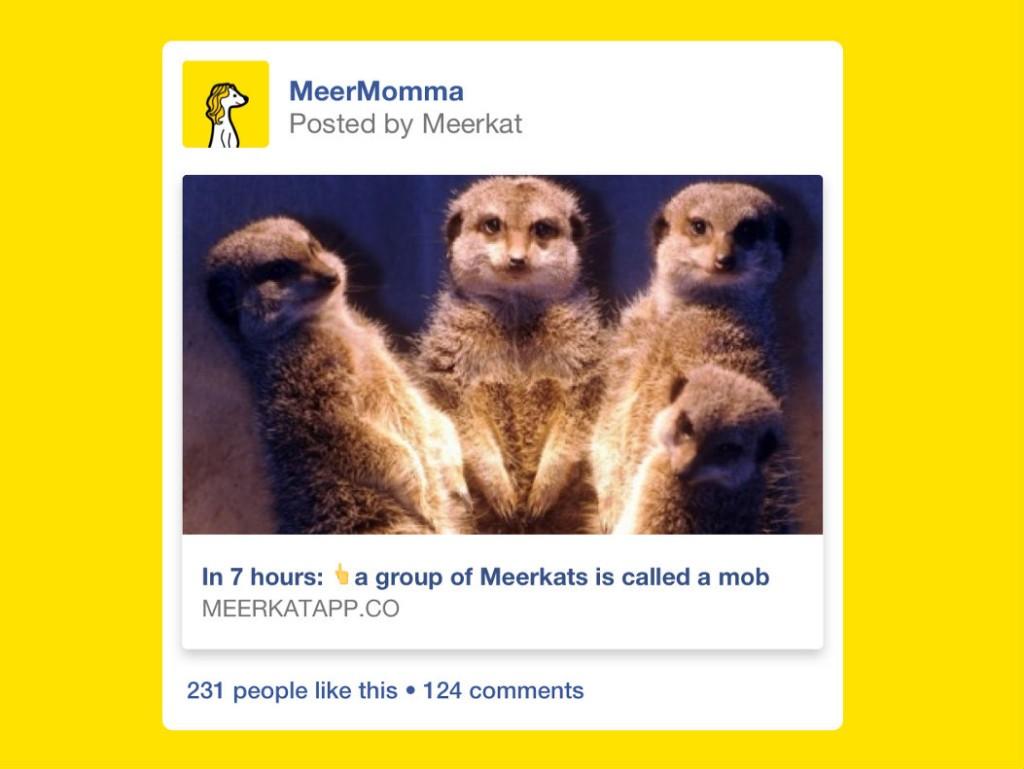 Meerkat-Facebook